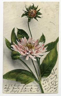 [Kwiaty]